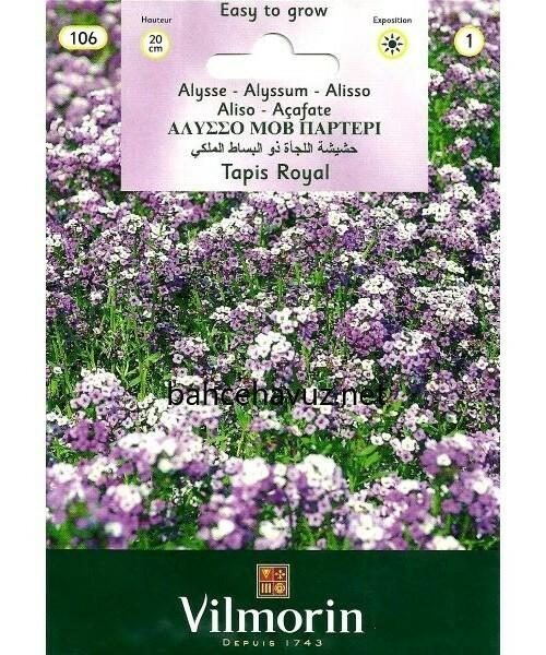 Vilmorin Alisyum Kraliyet Halısı Çiçek Tohumu