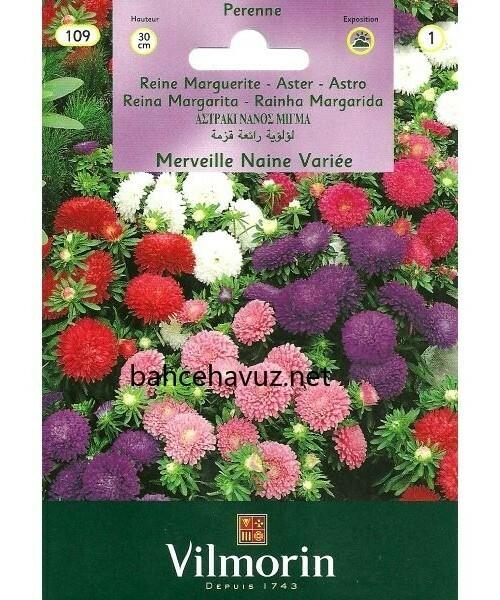 Vilmorin Karışık Renkli Saray Patı Çiçek Tohumu