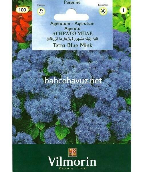 Vilmorin Mavi Vapur Dumanı Ageratum Çiçeği