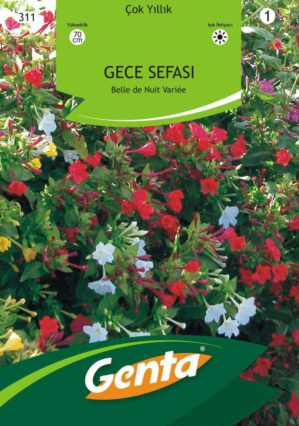 Genta Gece Sefası Çiçek Tohumu