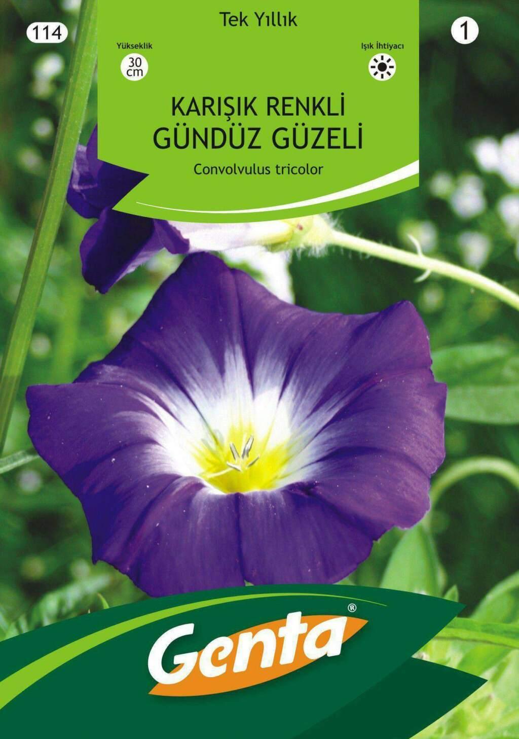 Genta Gündüz Güzeli Çiçek Tohumu Karışık Renkli