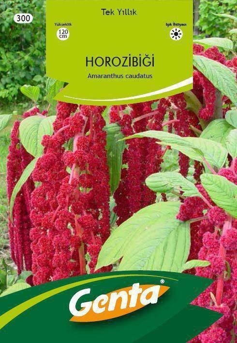 Genta Horoz İbiği Çiçek Tohumu