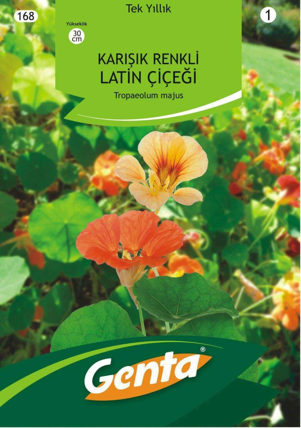 Genta Karışık Renkli Latin Çiçeği