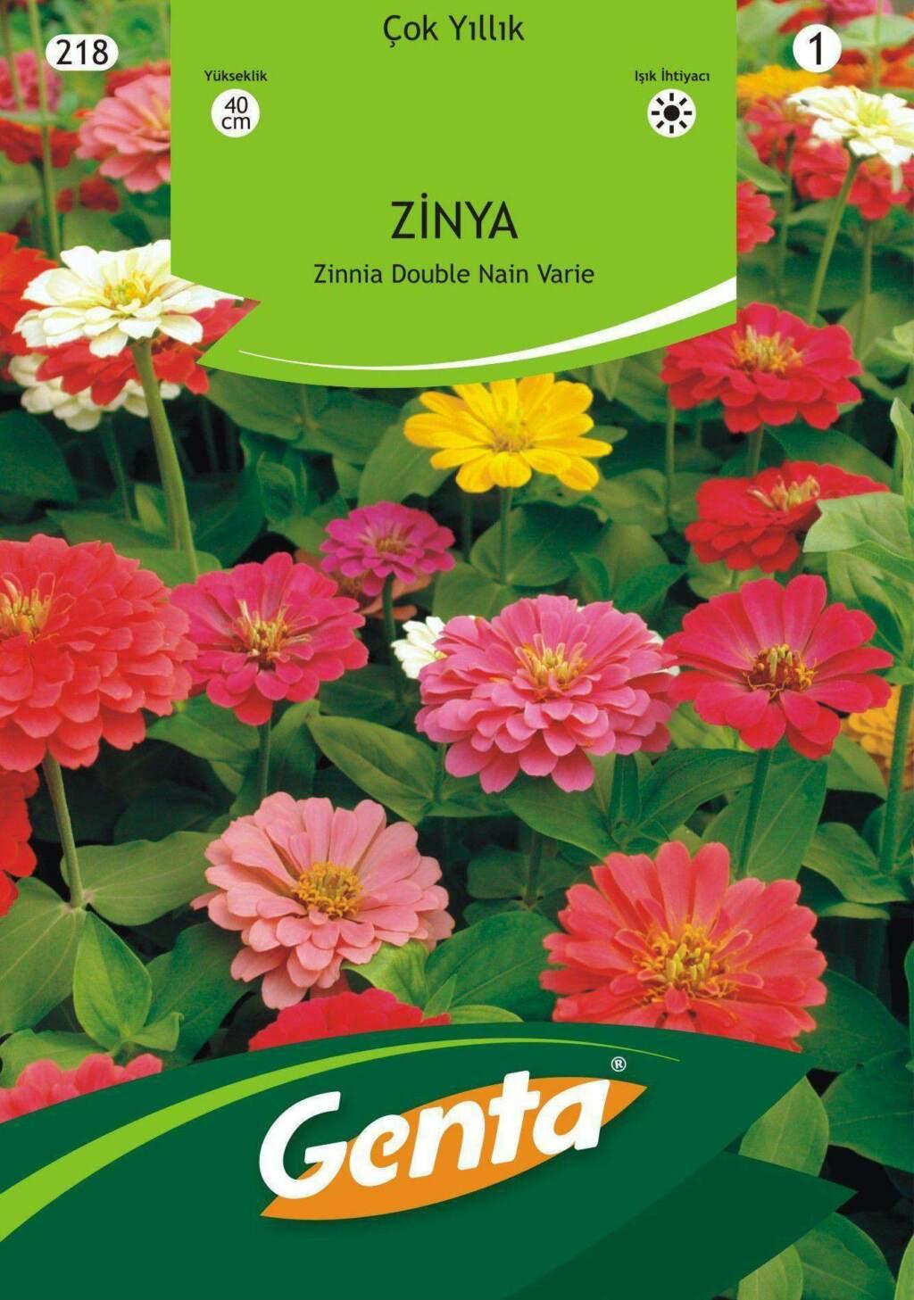 Genta Karışık Renk Zinya Çiçeği