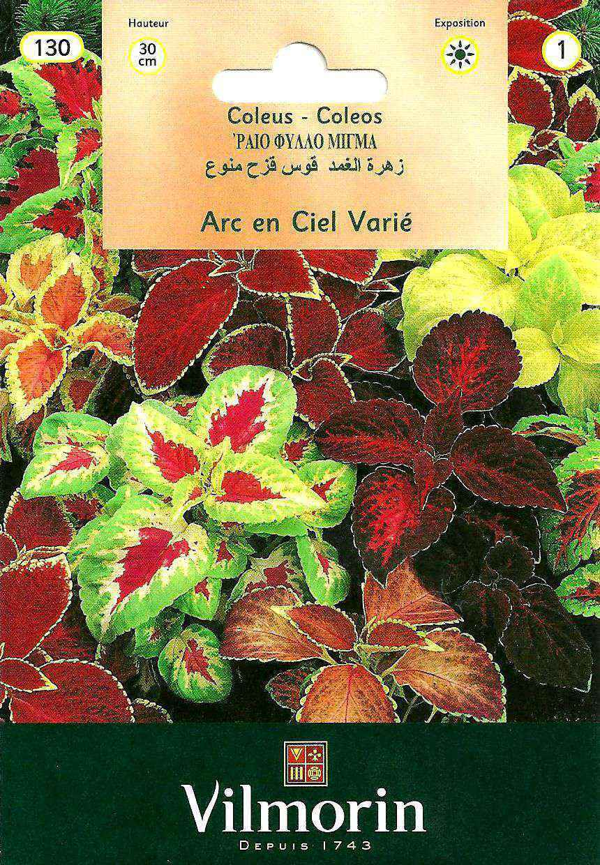 Vilmorin Yaprak Güzeli Çiçek Tohumu