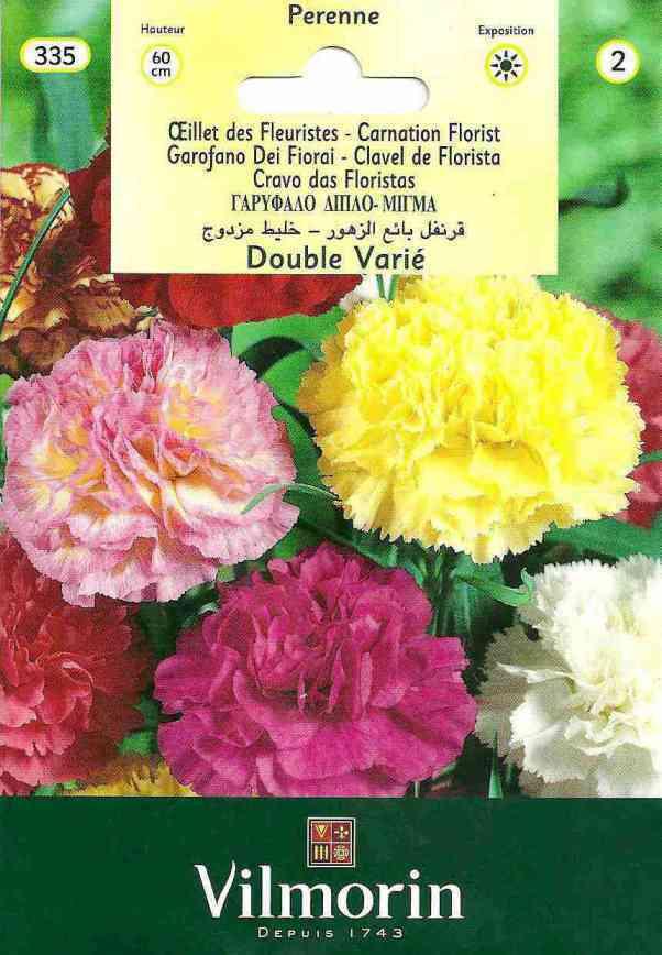 Vilmorin Karışık Renk İri Çiçekli Karanfil