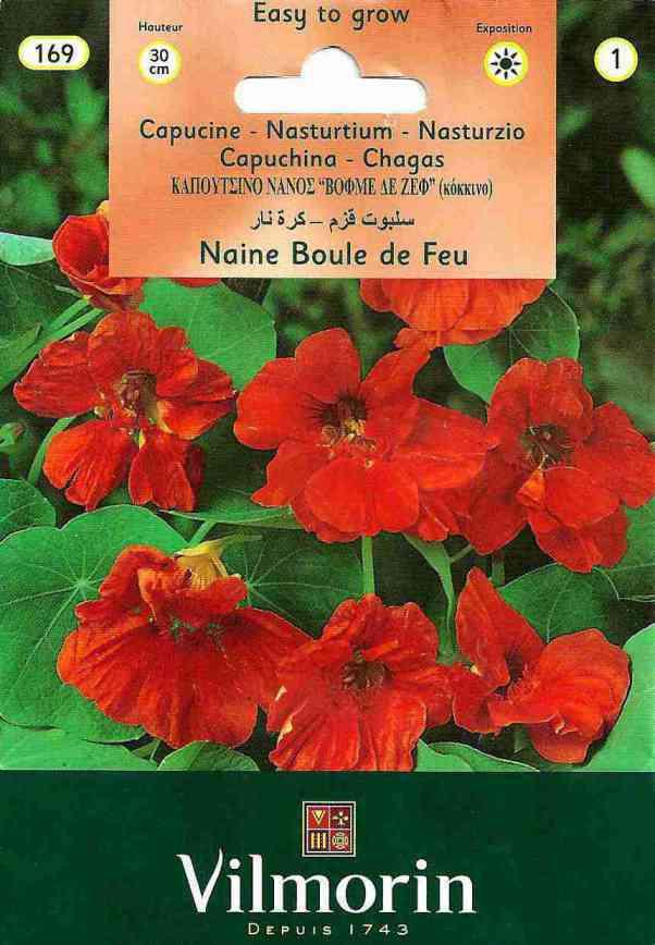 Vilmorin Kırmızı Renkli Latin Çiçeği