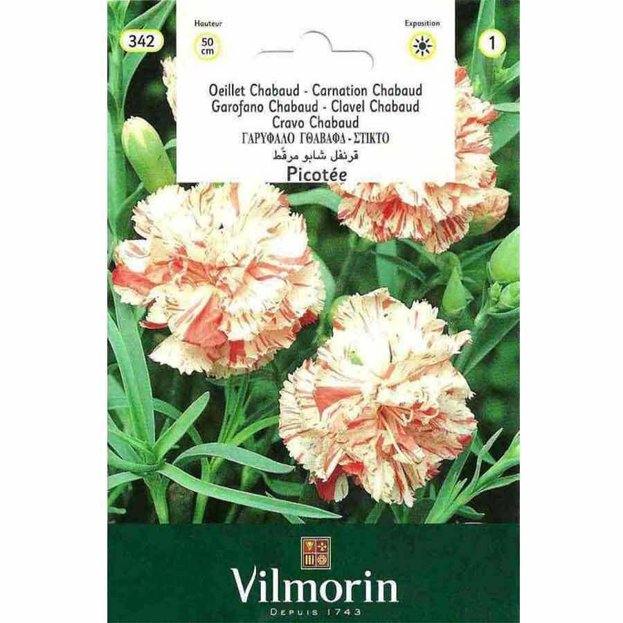 Vilmorin Alacalı İri Çiçekli Karanfil Çiçeği Kokulu
