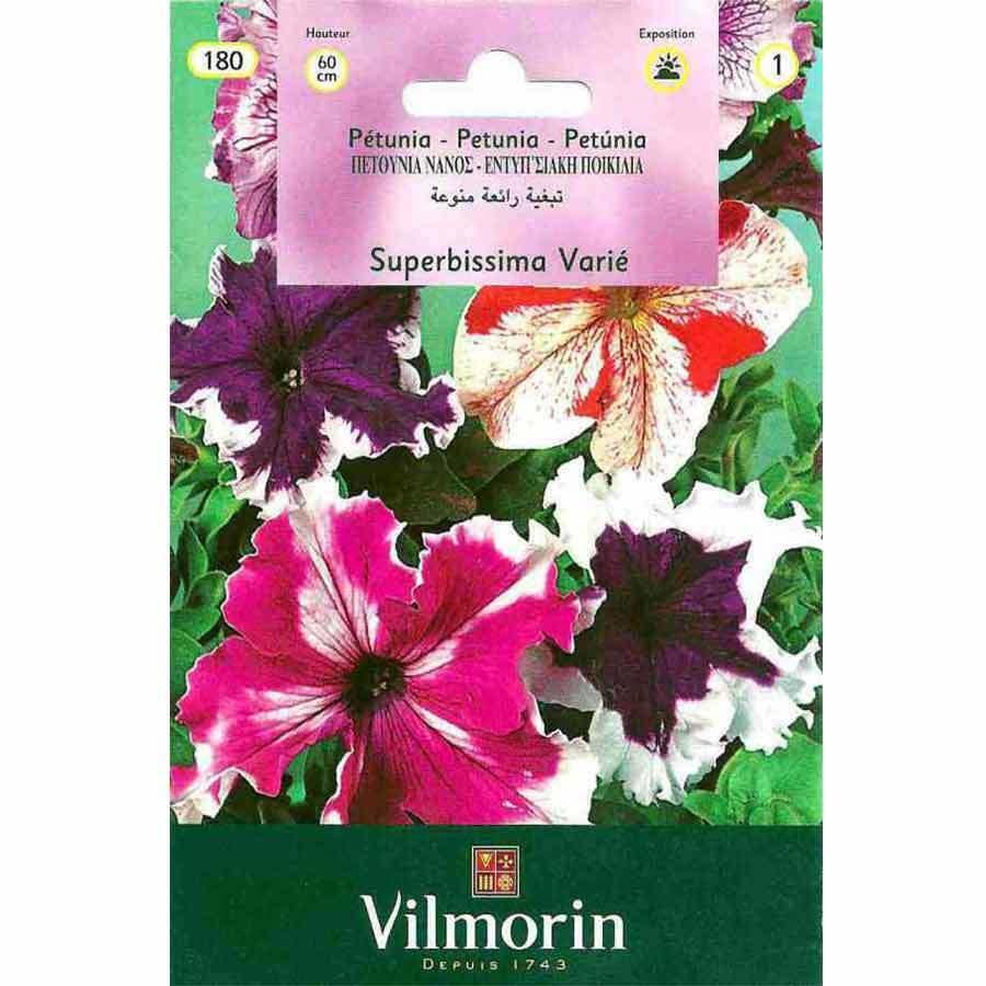 Vilmorin Alacalı Karışık Renk Petunya Çiçeği