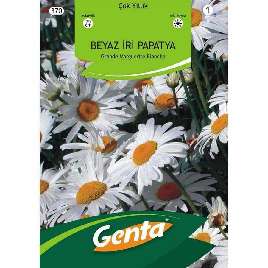 Genta Alman Papatyası (Margrit Papatya) Çiçeği