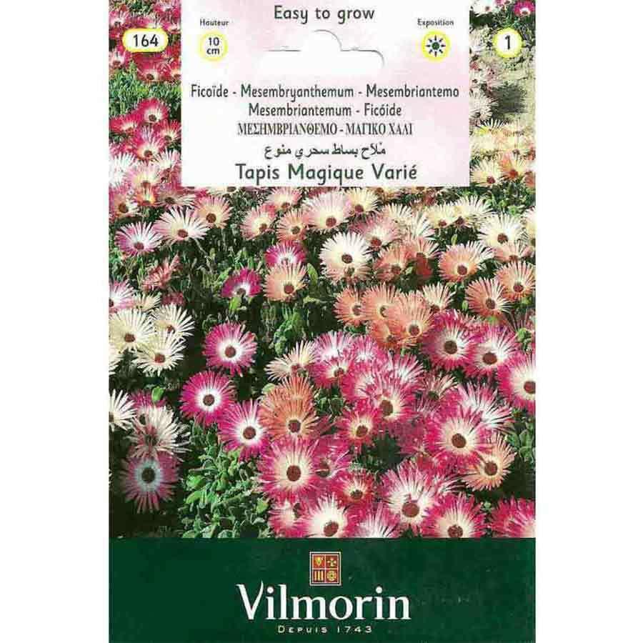 Vilmorin Buz Çiçeği