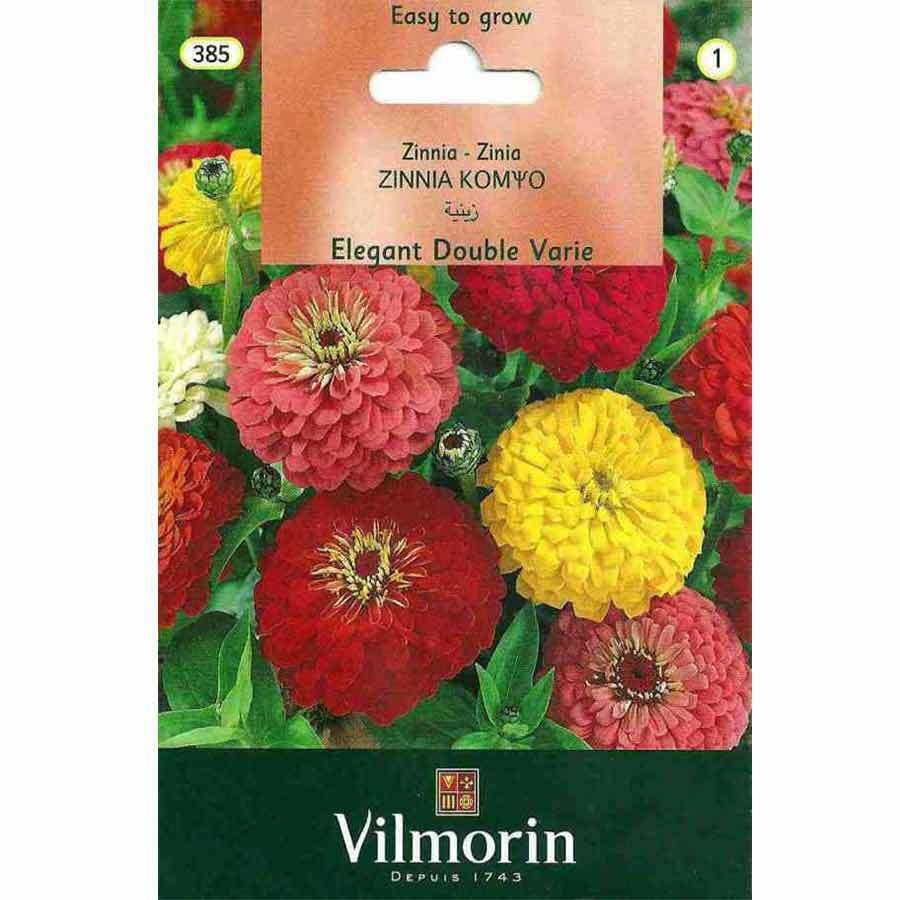 Vilmorin İri Çiçekli Kirli Hanım Zinya Çiçeği