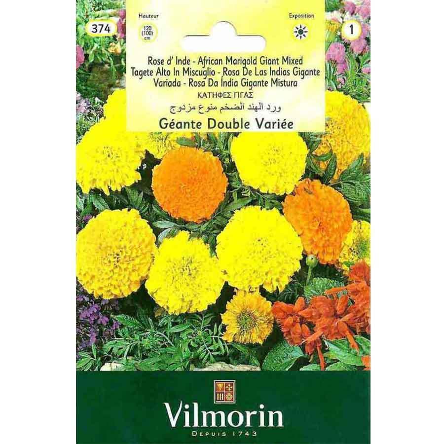 Vilmorin İri Kafa Kadife Çiçeği