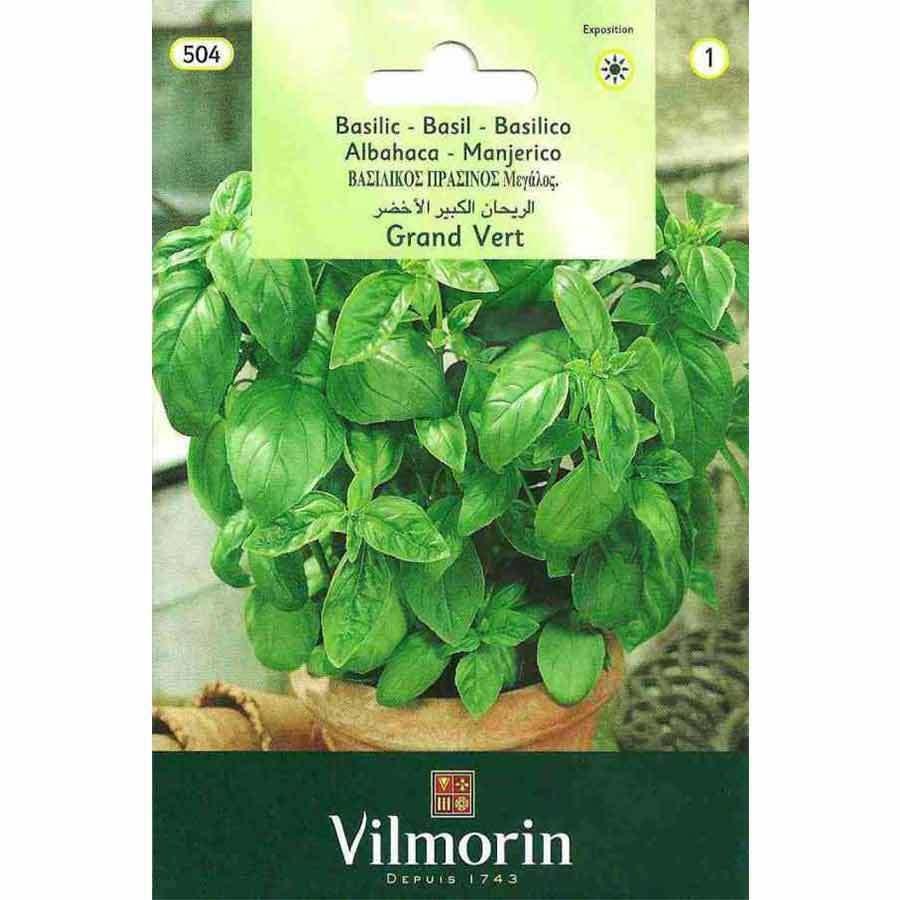 Vilmorin İri Yapraklı Fesleğen