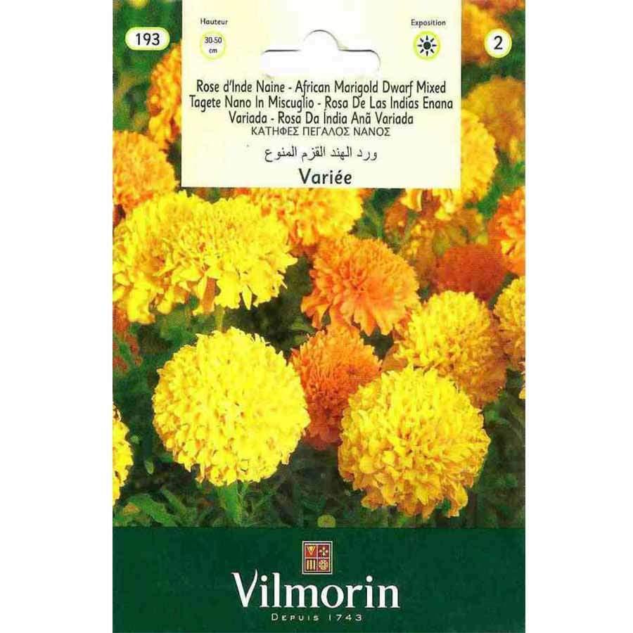 Vilmorin Karışık Renkli Kadife Çiçeği