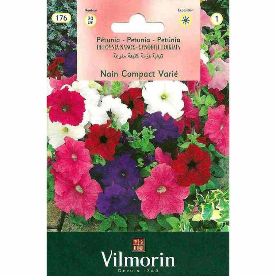 Vilmorin Karışık Renkli Kısa Petunya Çiçeği