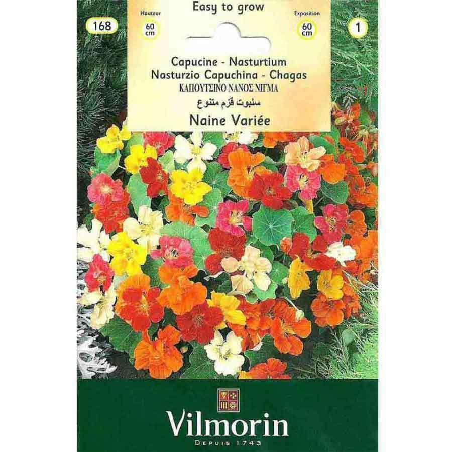 Vilmorin Karışık Renkli Latin Çiçeği