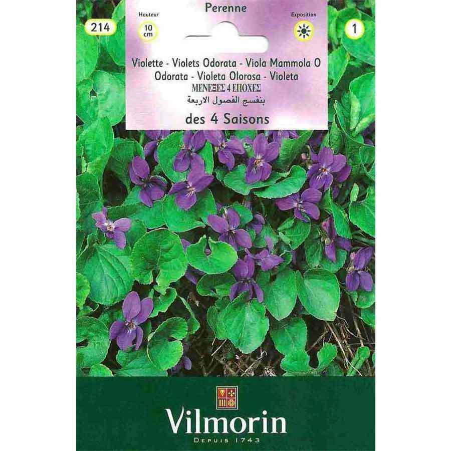 Vilmorin Kır Menekşesi Çiçeği Tohumu
