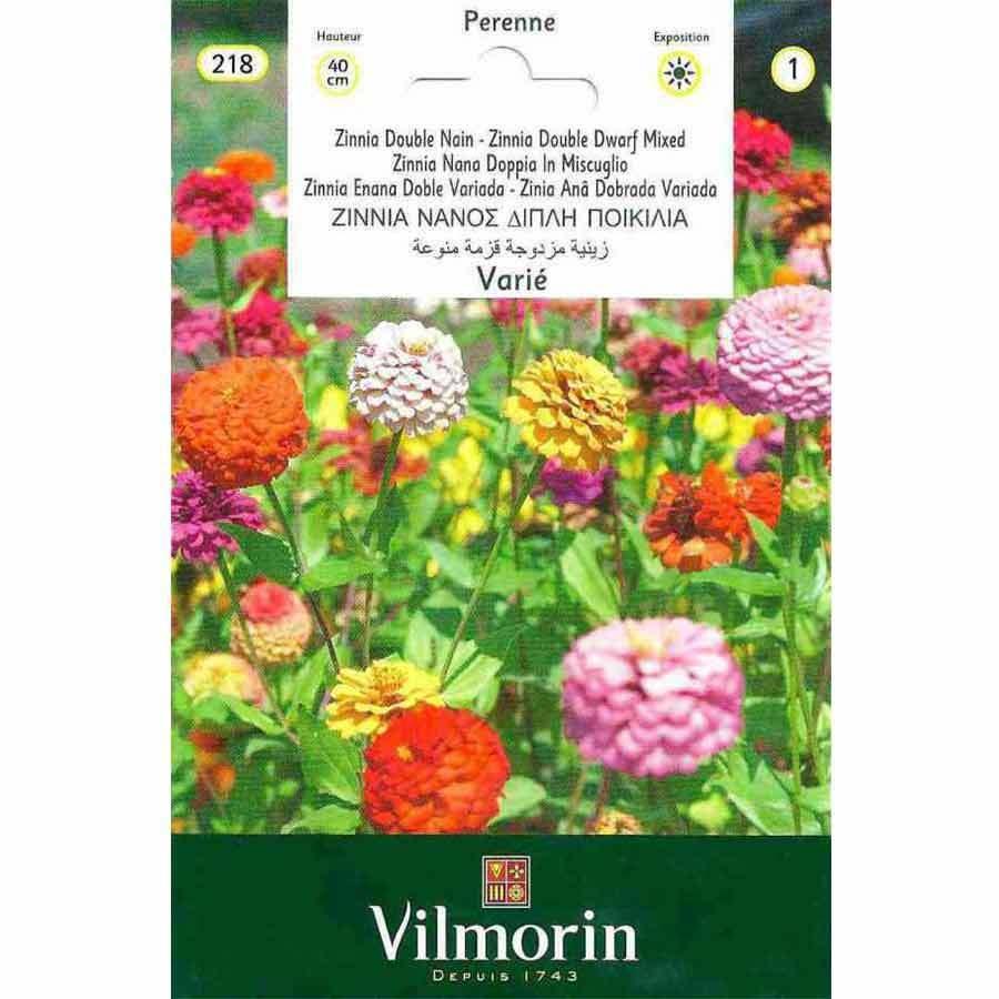 Vilmorin Bodur Kirli Hanım Zinya Çiçeği