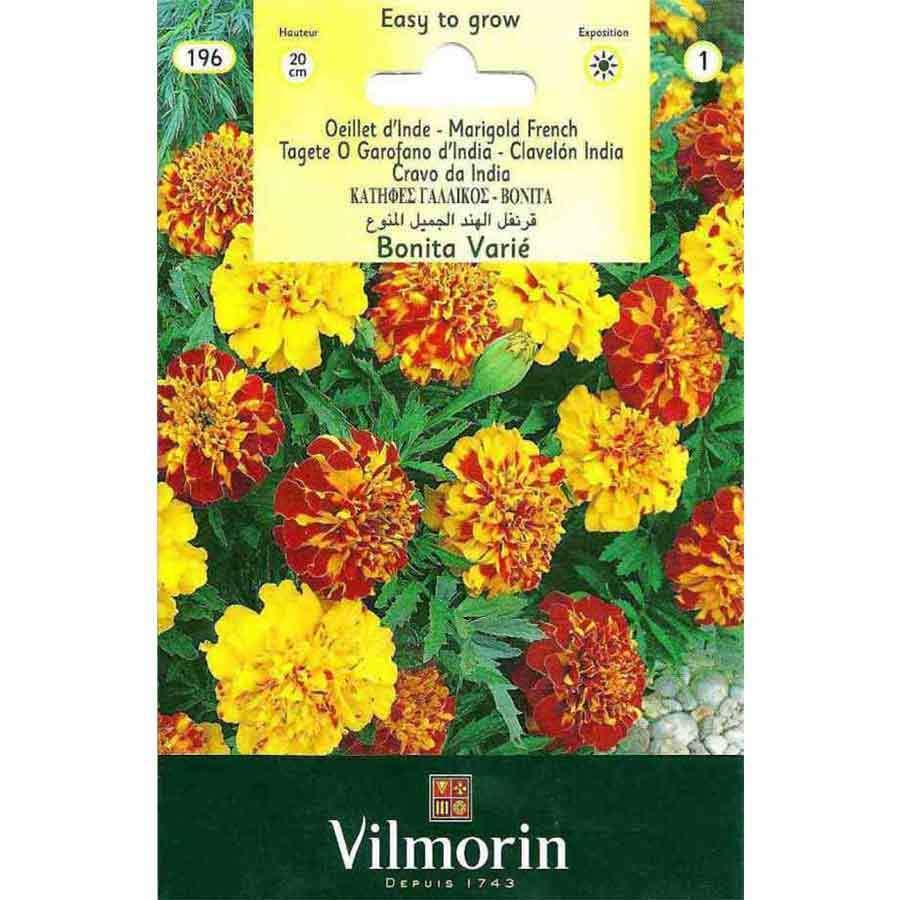 Vilmorin Kırmızı Renkli Kadife Çiçeği