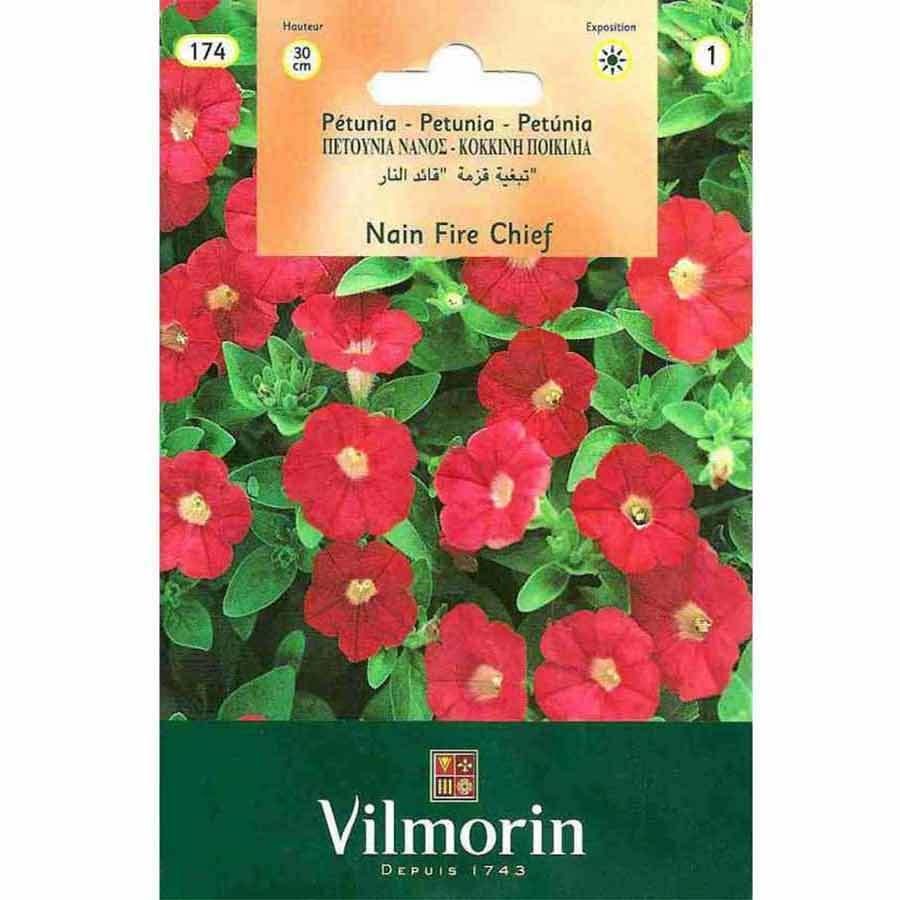 Vilmorin Kırmızı Renkli Kısa Petunya Çiçeği