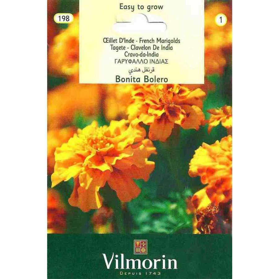 Vilmorin Kırmızı-Turuncu Renkli Kadife Çiçeği