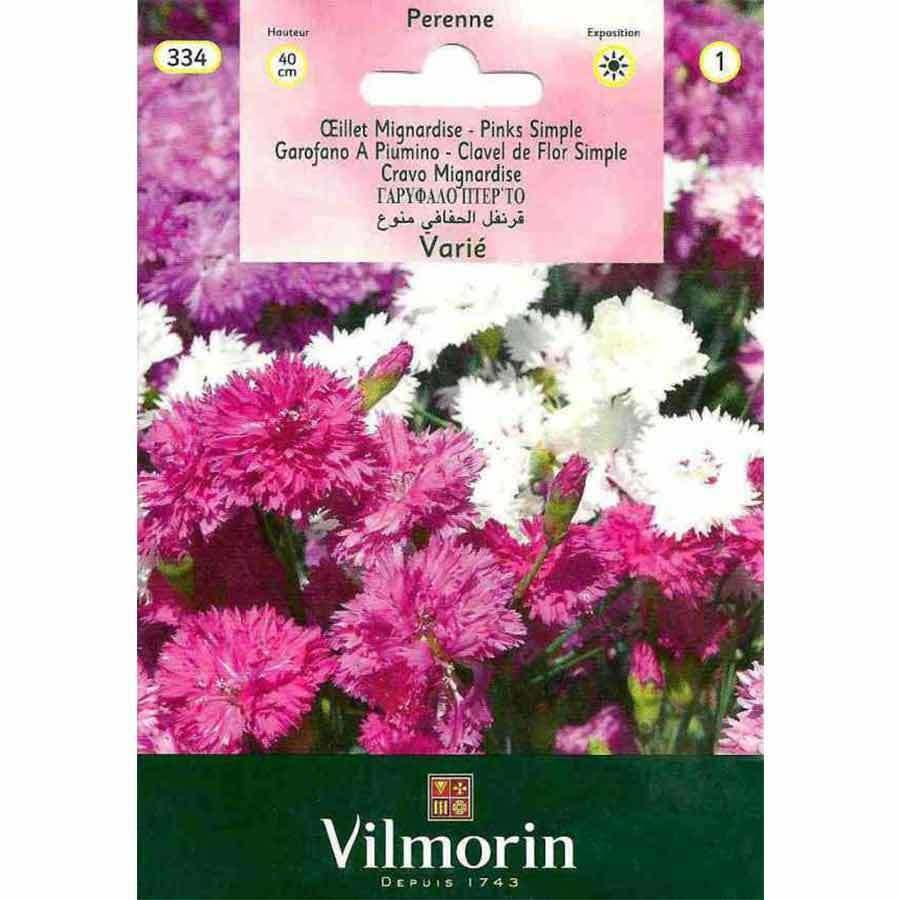 Vilmorin Karışık Renk Küçük Karanfil Çiçeği