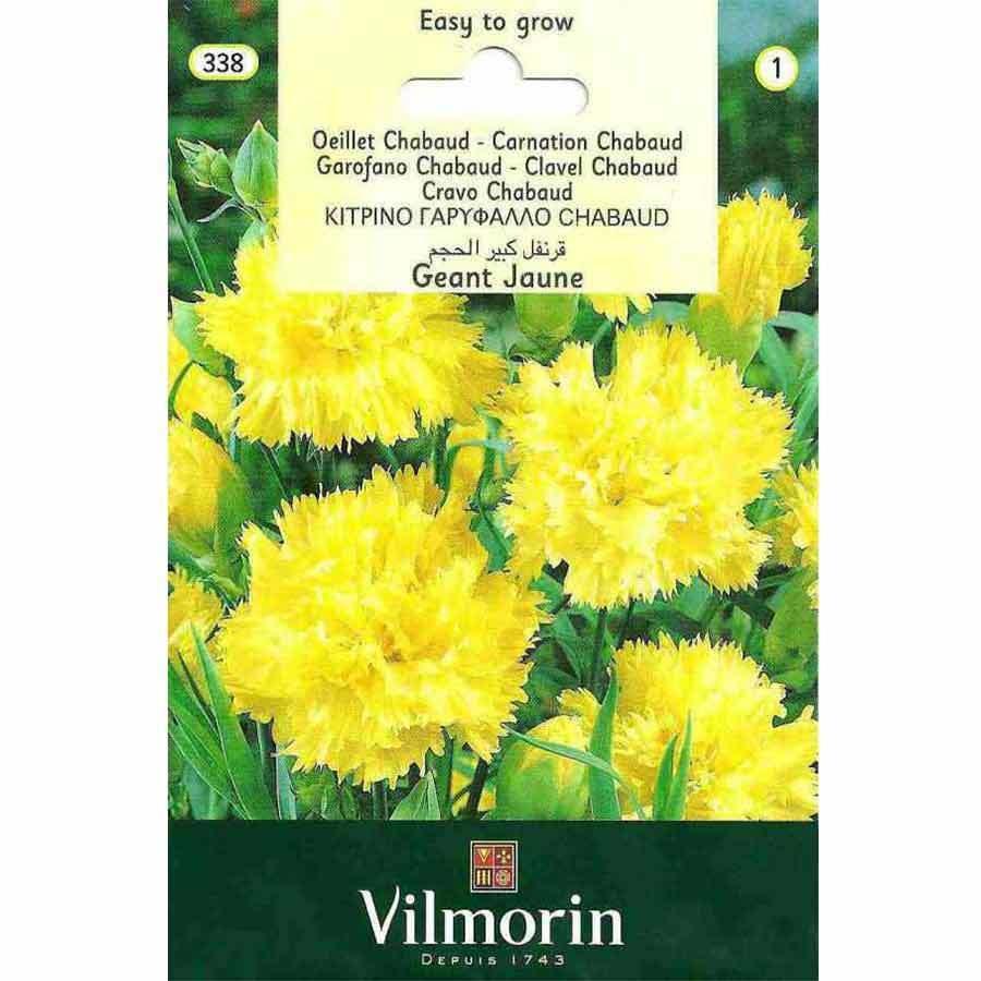 Vilmorin Sarı Renkli İri Çiçekli Karanfil Çiçeği