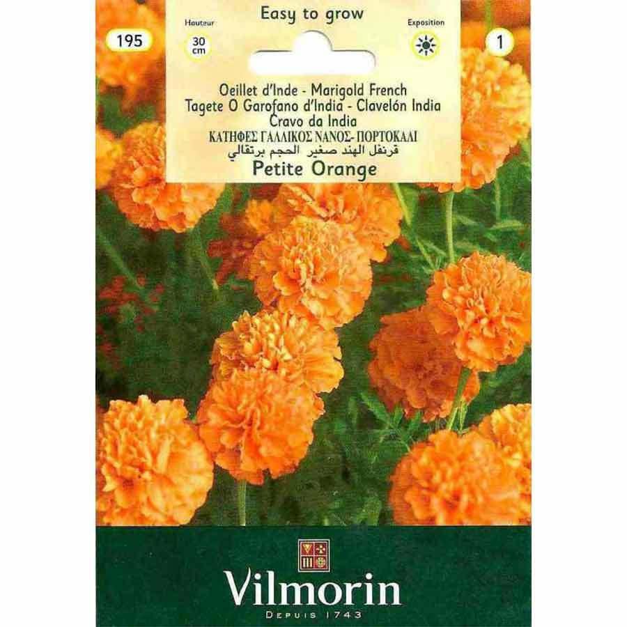 Vilmorin Turuncu Renkli Kadife Çiçeği