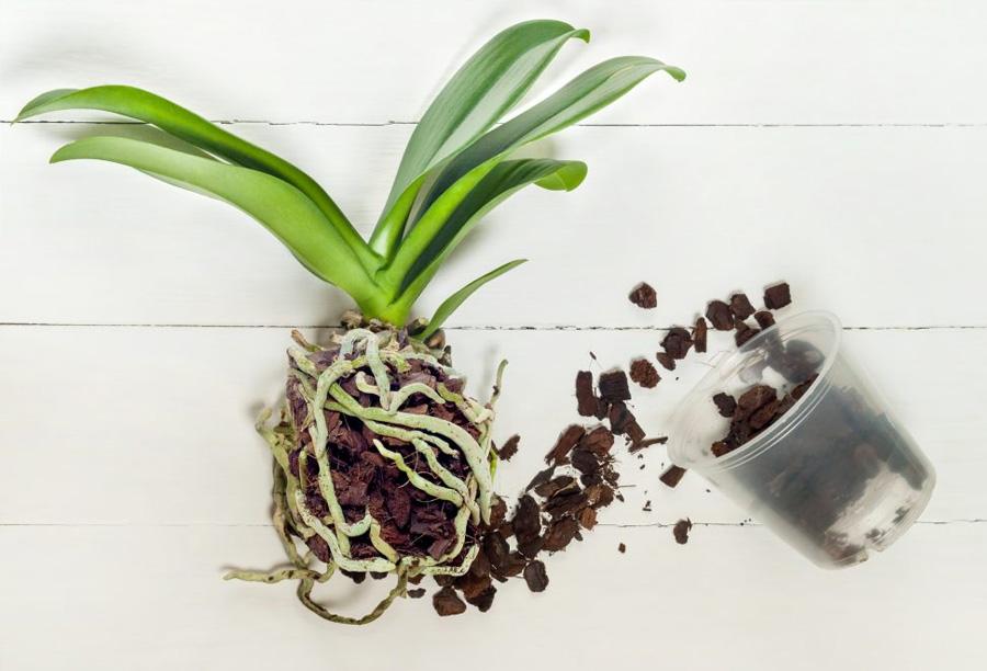 Orkide Toprağı 5 lt