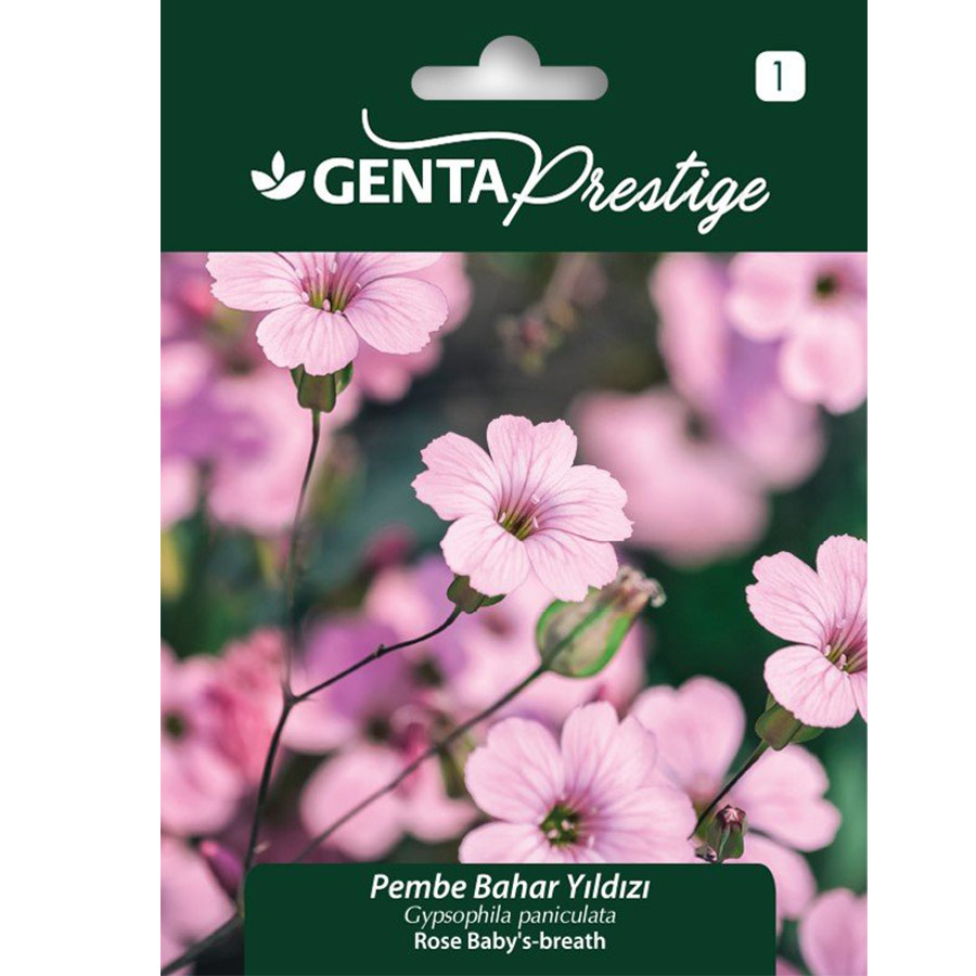 Genta Prestige Bahar Yıldızı Çiçeği